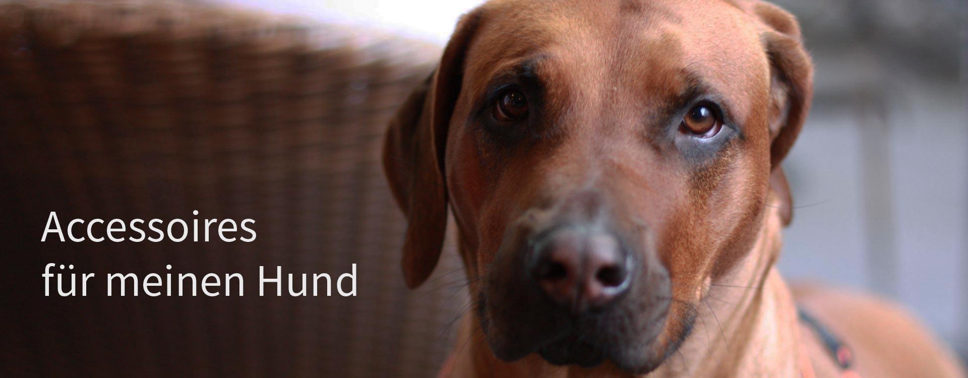 Lederband für Hunde