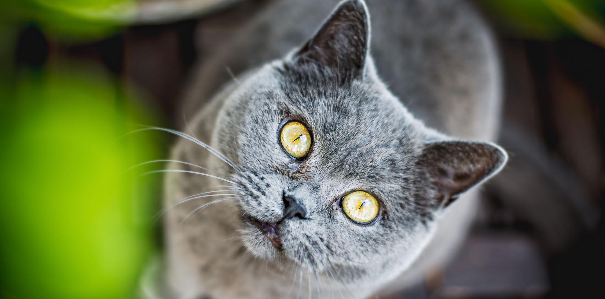 Paolito Onlineshop für Katzen und Hunde